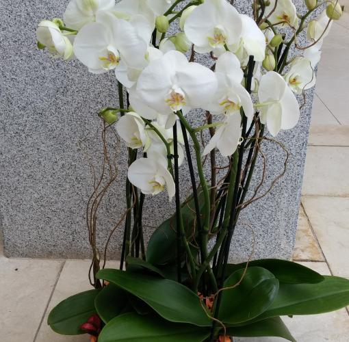 Arreglos Florales De Orquideas Arreglos Florales
