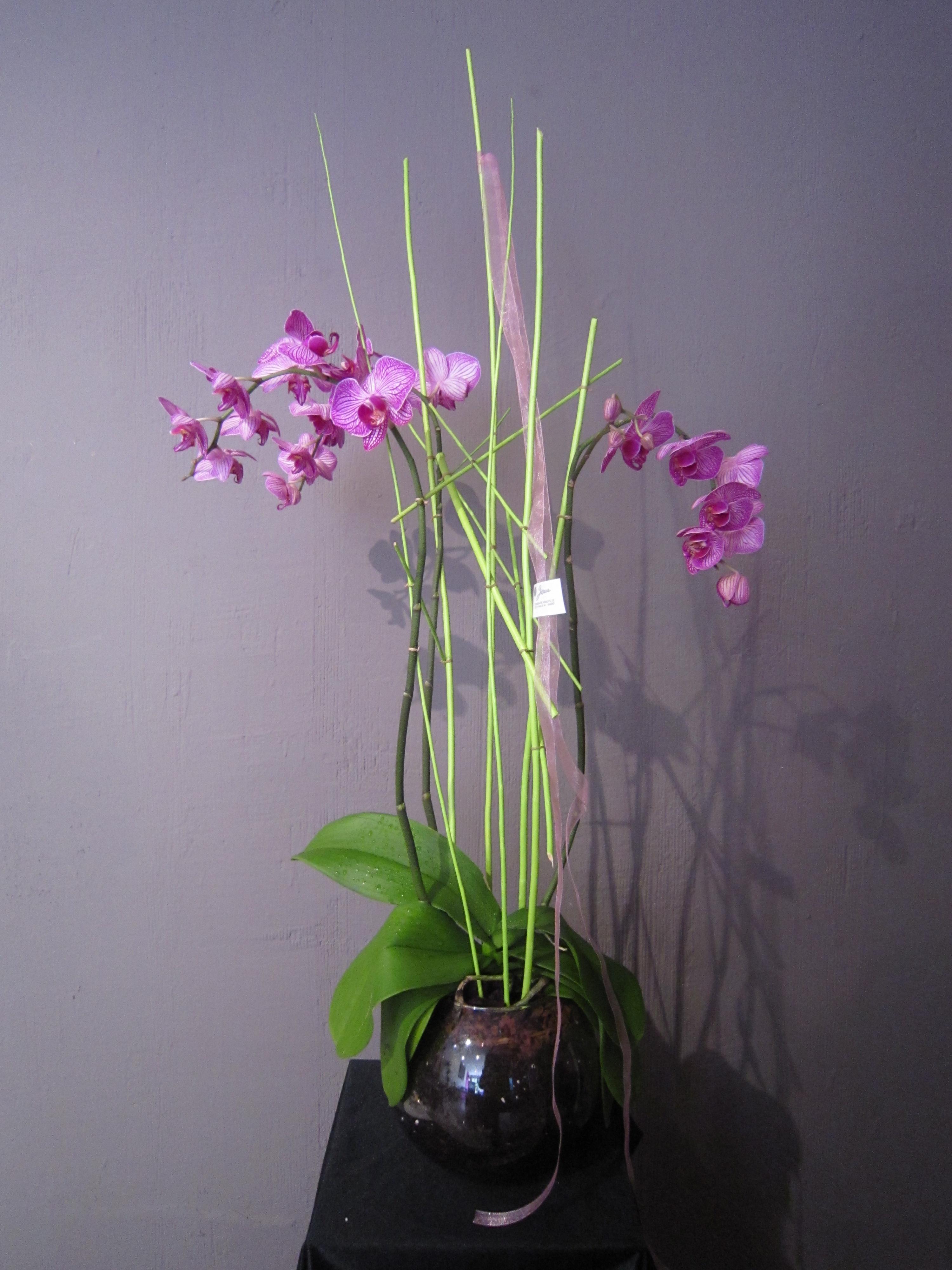 Arreglo de orquídeas en cristal (Ref 311)